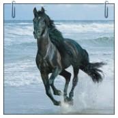 Kůň omalovánky